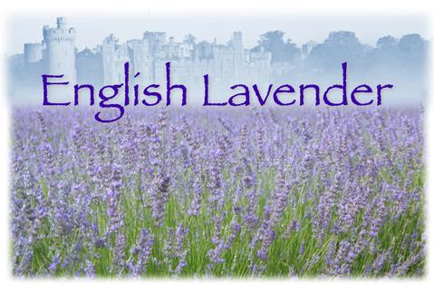 English Lavender (Natural)
