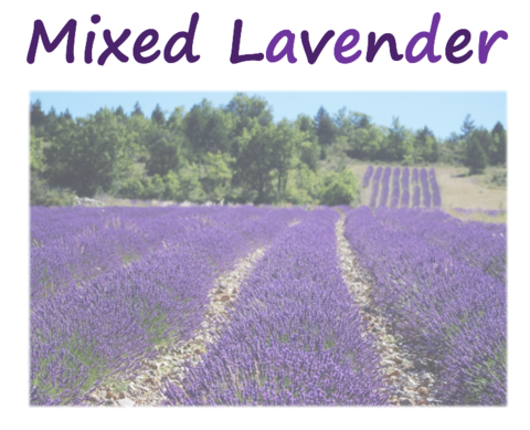 Lavender Mixed Species (Natural)