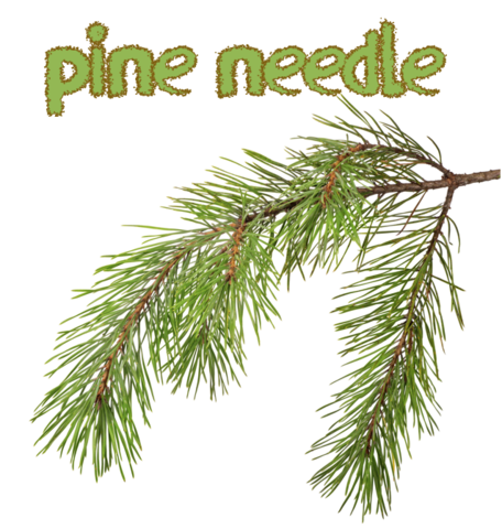 Pine Needle (Natural)