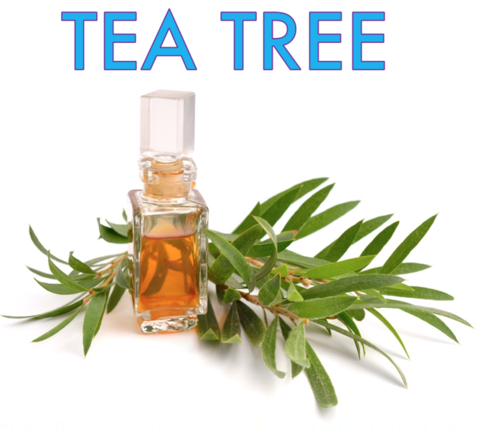 Tea Tree (Natural)