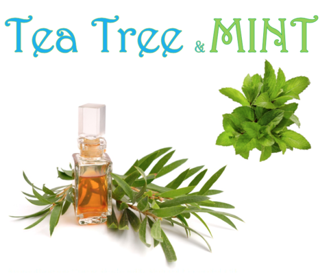 Tea Tree & Mint